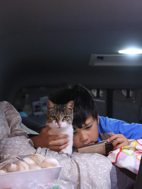 Korcula wild camping, Vanlife with cats