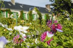 Garten  von Monet Blumen