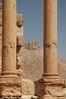 Palmyra Qalaat Shirkuh c.1230 Ayyubid (7e)