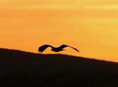 March 9, 2021 - Eagle at sunrise. (Bill Hutchinson)