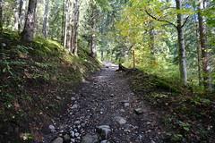 Forêt @ Le Grand-Bornand