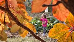 colors of late autumn / sonbahar renkleri arasında yeğenim eylül