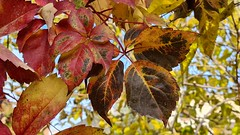 colors of late autumn