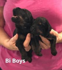 Rosie Bi Boys pic 3 3-12