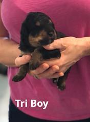 Rosie  Tri Boy pic 3 3-12