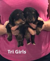 Rosie Tri Girls pic 4 3-12