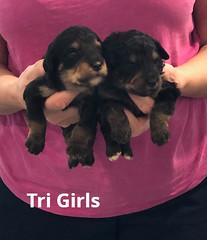 Rosie Tri Girls 3-12