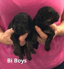 Rosie Bi Boys 3-12