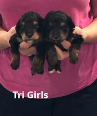 Rosie Tri Girls pic 2 3-12