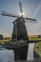 Windmühle Niederlande bei Amsterdam II