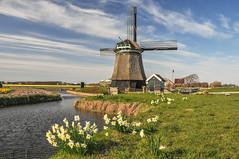 Windmühle Niederlande bei Amsterdam III
