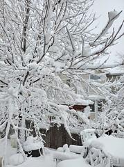 March 14, 2021 - Thornton's big storm. (Kathy Ball)