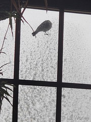 March 14, 2021 - A bird clings to a screen during the storm. (LE Worley)