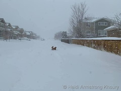 March 14, 2021 - A dog enjoys the storm. (Heidi Armstrong Khoury)