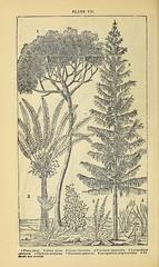 Anglų lietuvių žodynas. Žodis lycopodium alopecuroides reiškia Lycopodium alopecuroids lietuviškai.