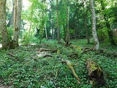 Sentier dans la forêt @ Annecy-le-Vieux