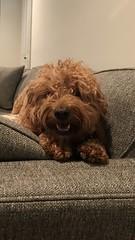 Molly is a sweek Kasey & Nolan puppy