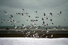 Birds gathering