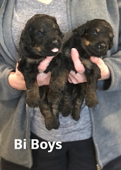 Rosie Bi Boys pic 3 3-19