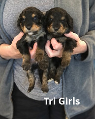 Rosie Tri Girls pic 3 3-19