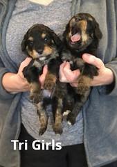 Rosie Tri Girls pic 2 3-19