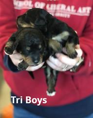 Irma Tri Boys pic 4 3-19