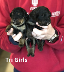 Irma Tir Girls pic 2 3-19