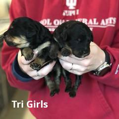Irma Tri Girls 3-19
