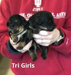 Irma Tri GIrls pic 3 3-19