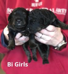 Irma Bi Girls 3-19