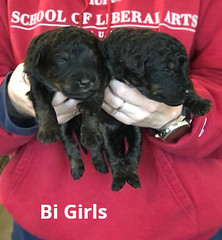 Irma Bi Girls pic 3 3-19