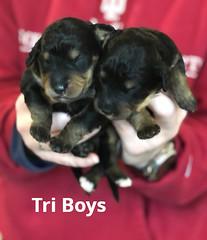 Irma Tri Boys pic2 3-19
