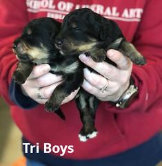 Irma Tri Boys pic 33-19