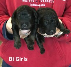 Irma Bi Girls pic 4 3-19