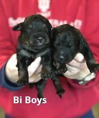 Irma Bi Boys pic 3 3-19