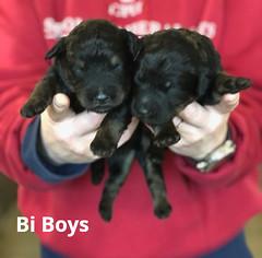 Irma Bi Boys 3-19