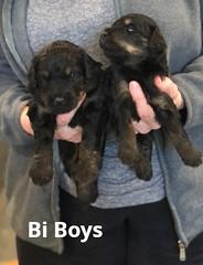 Rosie Bi Boys pic 4 3-19