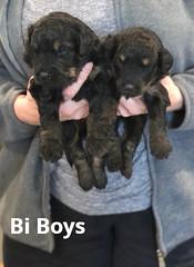 Rosie Bi Boys 3-19