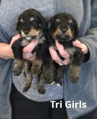 Rosie Tri Girls pic 4 3-19