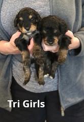 Rosie Tri Girls 3-19