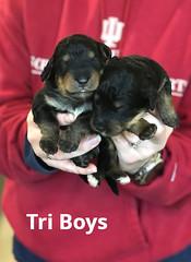 Irma Tri Boys 3-19