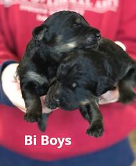 Irma Bi Boys pic 2 3-19