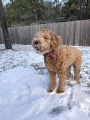Willow love the snow