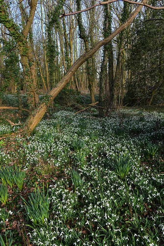February in the wood