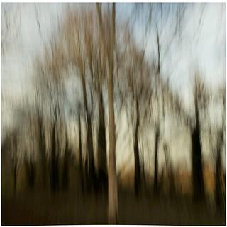Dreamy Trees