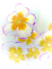 HSS little bloomers...