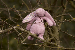 Photo of Lost pink rabbit