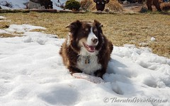 March 20, 2021 - Scout is in no rush for the snow to melt away. (ThorntonWeather.com)