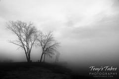 March 20, 2021 - Foggy scene in Adams County. (Tony's Takes)