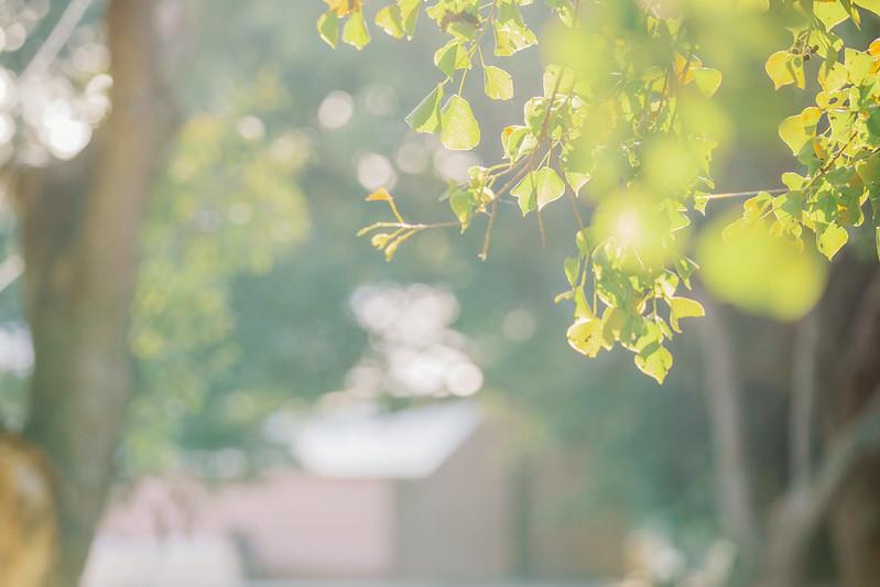 彰化顏式牧場婚攝,顏式牧場婚禮,顏式牧場婚宴,戶外證婚,台中婚攝,美式婚禮,後院婚禮,顏式牧場婚紗照,婚攝推薦,婚攝ptt推薦,婚攝作品,婚攝價格,台北婚攝價格,顏式牧場婚禮記錄,